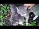 Кошачьи нежности, или Двое из ларца одинаковые с лица