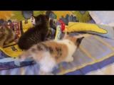 New Пупсики.Объявляем кастинг на звание счастливых родителей кото-девочек-картинок!