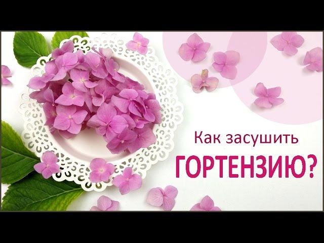 ЮВЕЛИРНАЯ СМОЛА || Гортензия || Как засушить цветы How to dry a hydrangea