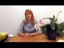 Орхидея фаленопсис Посадка и уход
