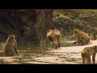 Неизведанные острова 2-й сезон 1-я серия. Япония - Острова контрастов / Wildest Islands (2013) HD 720p
