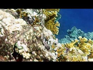 Мое видео под водой красного моря