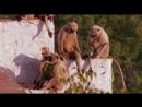 BBC Ребятам о Зверятах Лангуры Обезьяны 1 Сезон 2 Серия