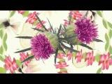 Botanical Effects - новая линия по уходу за кожей Мэри Кэй.mp4