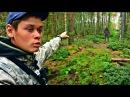 Вот что можно найти в лесу Сбор грибов летом (Лисички пошли) - Архив
