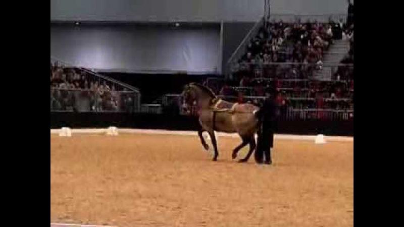 Bastiaan de Recht Barock show cup 2013 Pferd und Jagd