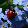 Мой Цветочный Мир