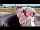 Байкерша) Biker Pig Baby Banks