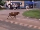 Драка, животное против человека