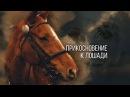 Прикосновение к лошади