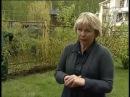 Создание ограждений живой изгороди из растений на даче 1 Канал