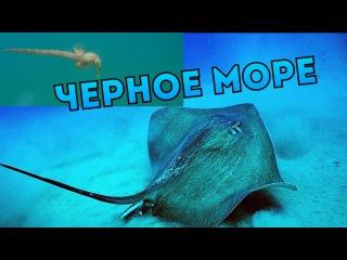 Дайвинг.Подводная съемка. Прибрежные обитатели Черного моря.