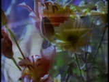 Suzanne Vega feat. DNA - Toms Diner