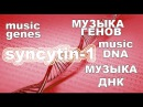 Музыка ДНК Мелодия Генома Syncytin 1 enverin