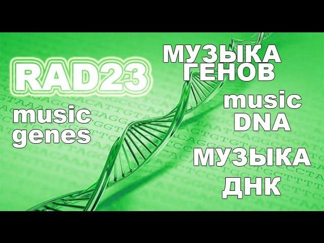 Музыка ДНК - Как поет человеческий ген RAD23 homolog A, transcript variant 2, mRNA
