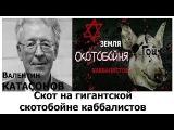 Валентин Катасонов Мы Скот на гигантской скотобойне каббалистов