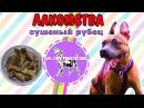 Лакомство для собак своими руками дрессировка собак питбуль