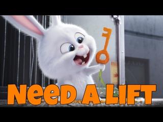 Фраза DO YOU NEED A LIFT из мультфильма The secret Life of Pets