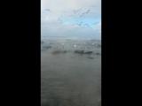 Аида Аидын Аққу көріп, теңызде01.01.2017