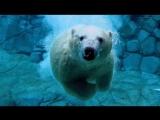 Polar Bears - The Quest for Sea Ice