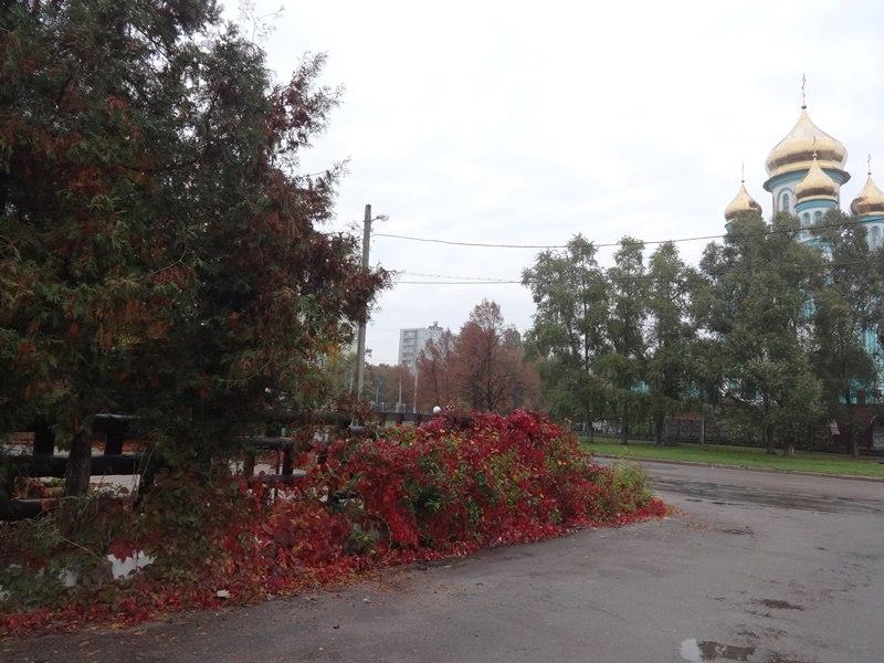 Подарки осени удивили харьковчан (ФОТО)