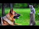 Вечные враги Собака помогает котенку забраться по лестнице