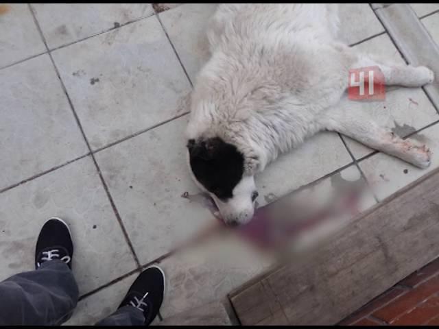 В Нижнем Тагиле мужчина застрелил из ружья соседского пса за лай
