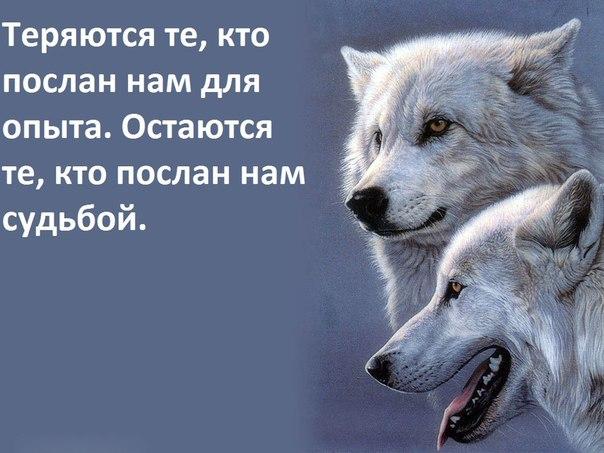 https://pp.vk.me/c626826/v626826366/5fe0/pT4T13CDwkI.jpg