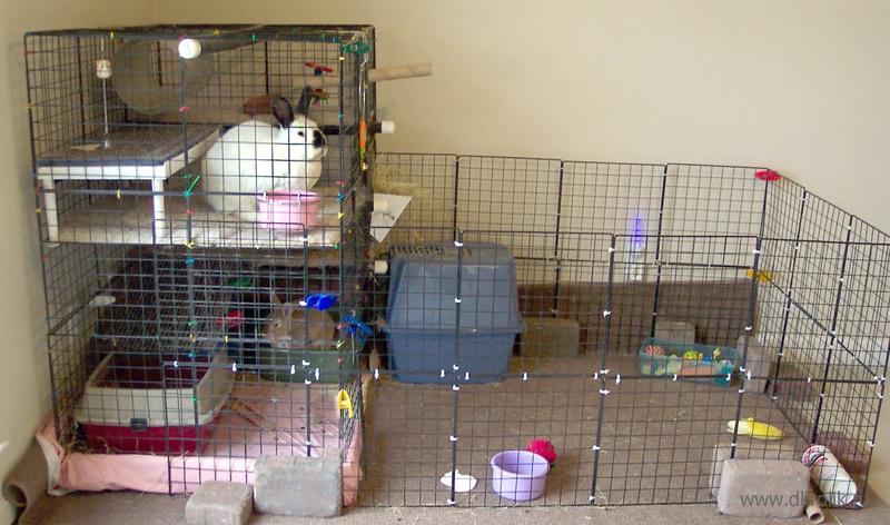 Клетка для декоративного кролика своими руками видео 54