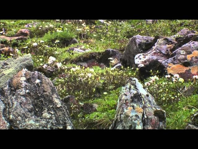 BBC Дикая природа России - Cибирь