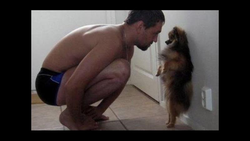 Lustige hunde videos zum totlachen. Süße hunde filme 3