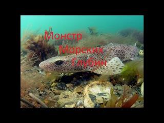 Морская рыбалка поздней осенью с Морским Волком Дядей Дмитрием Рыбалка в Ирландии