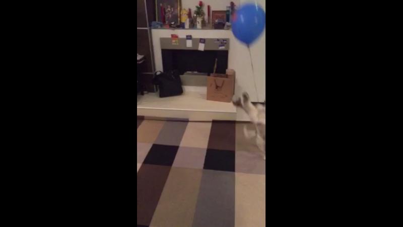 Пробила шарик
