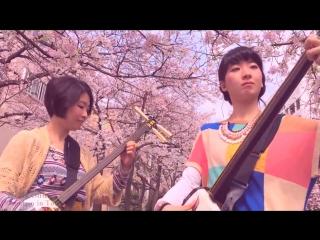 Японские девочки игрют под вишнями на сямисэне