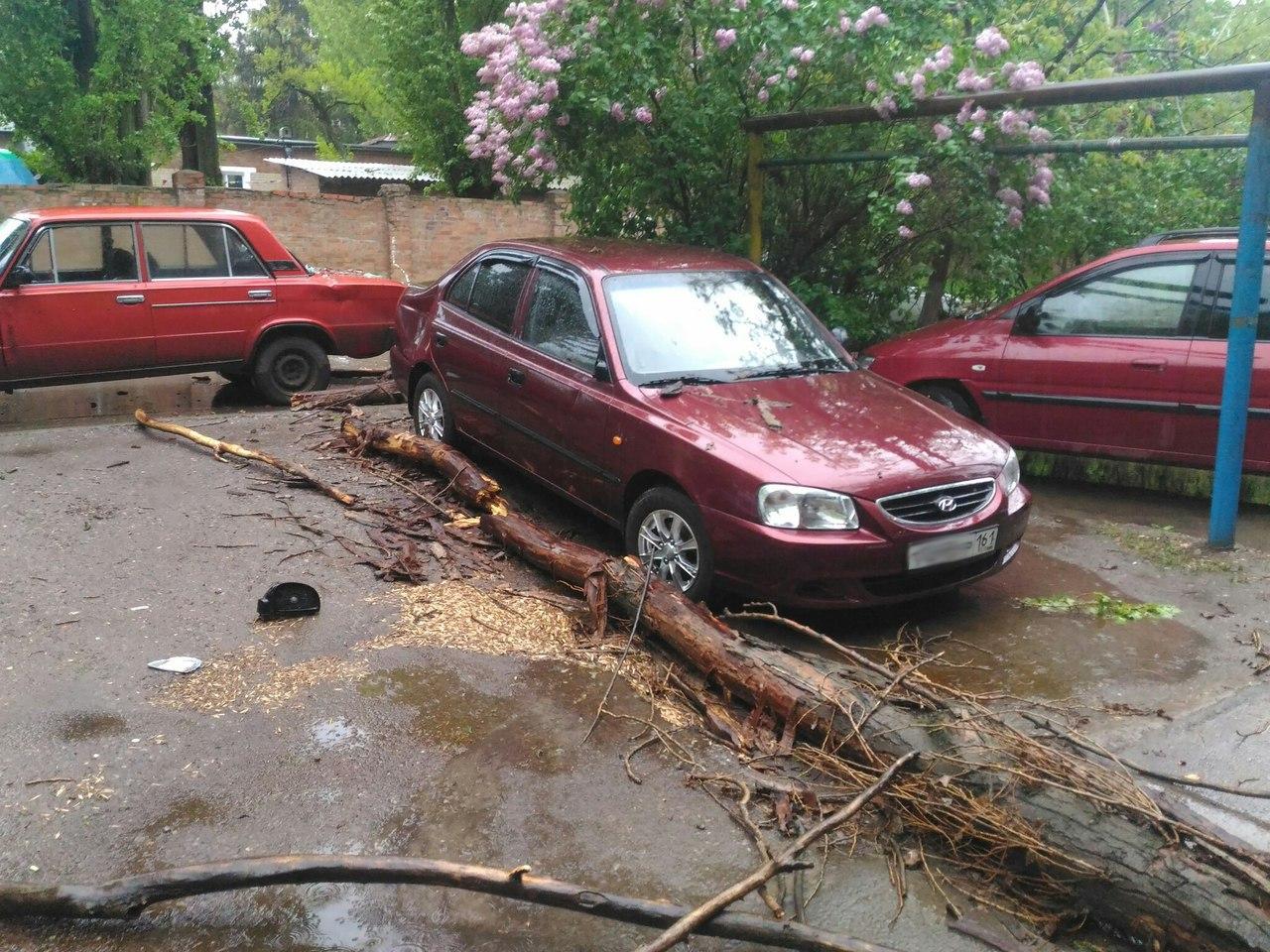 В Таганроге из-за ночной грозы дерево упало на несколько автомобилей
