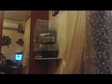 Мой попугай стал издавать какие то звуки.