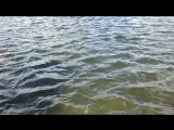 Бешеный клёв в Дылдино Озерное