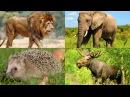 Названия животных для детей и их голоса. Мультики для малышей 2 лет| Learn Animals Names and Sounds