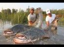 Жесть Ловля Сома 100 кг,  2,5 метра Рыбалка на Сома