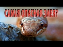 Самая опасная змея Медянка Smooth snake Coronella austriaca не ядовитая змея