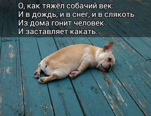 https://cs7057.vk.me/c626828/v626828254/3c410/aQ2dHOU_tTQ.jpg