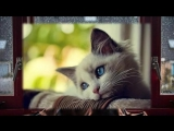 Маша Ржевская Когда я стану кошкой...