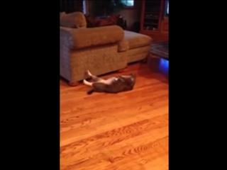 Кот качает пресс под музыку.