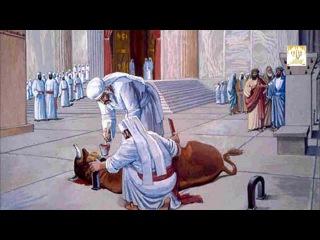 «МАШИАХ - ЖЕРТВА РЫЖЕЙ ТЕЛИЦЫ» (Хукат — Бемидбар (Числа) 19:1-22:1)