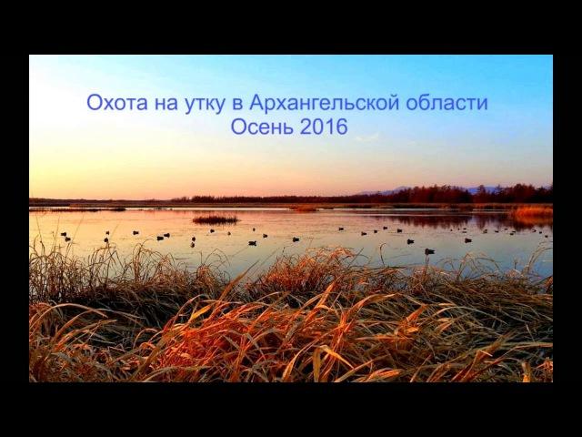 Охота на утку в Архангельской области | Осень 2016