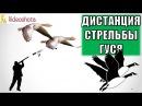 C какой дистанции стрелять гуся на охоте Videoohota