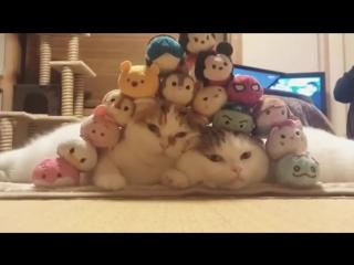 Терпеливые японские коты