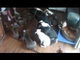 Терпеливые собачки