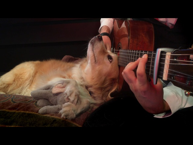 Green Day - Boulevard of Broken Dreams Fingerstyle (Trench Maple)