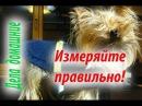 Основные ошибки допускаемые при снятии мерок с собаки